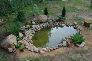 Декоративный пруд на приусадебном участке
